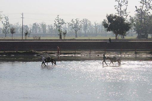River, Water, Man, Donkey, Sun Light, Ganga, Nature