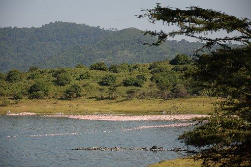 Tanzania, Arusha Np, Momela, Lakes, Landscape, Green