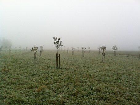 Orchard, November, Fog, Plant, Trees, Germany, Autumn