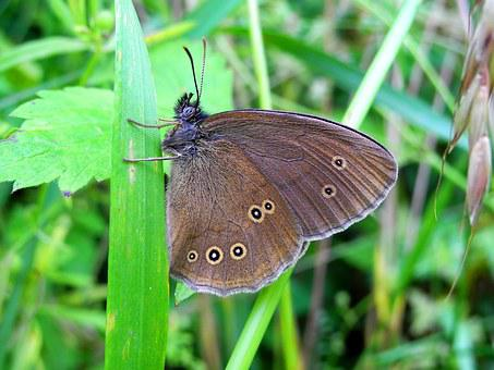 Butterfly, Insect, Nature, Wings, Butterfly Wings