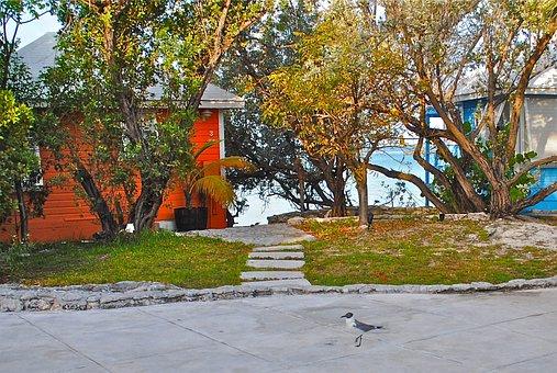 Staniel Cay Yacht Club, Exumas, Bahamas, Bird, Cottages