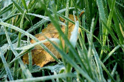 Grass, Ripe, Hoarfrost, Leaf, Sun, Shadow, Frozen, Ice