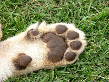 Lion, Cub, Foot, Pads, Paw, Cat, Big Cat, Wildlife