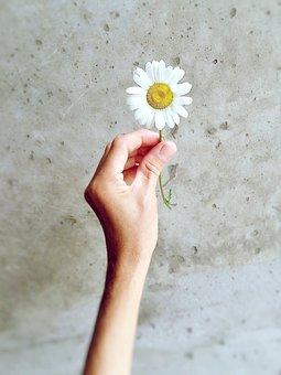 Daisy, Wildflower, Nature, Summer, Flower, Hand