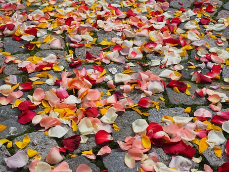 Rose Petals, Petals, Wedding, Red, Love, Scatter Roses