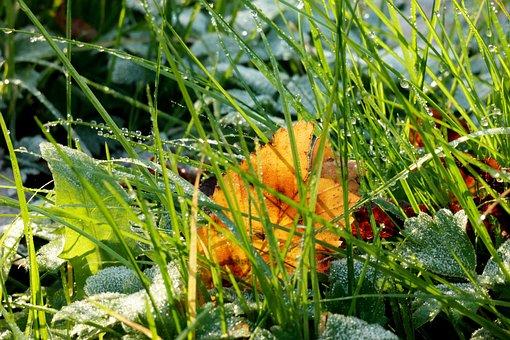 Grass, Ripe, Dew, Hoarfrost, Leaf, Sun, Shadow, Frozen