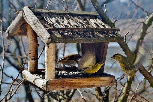 Birds, The Feeder, Bird Feeder, Skirmish, Dogfight