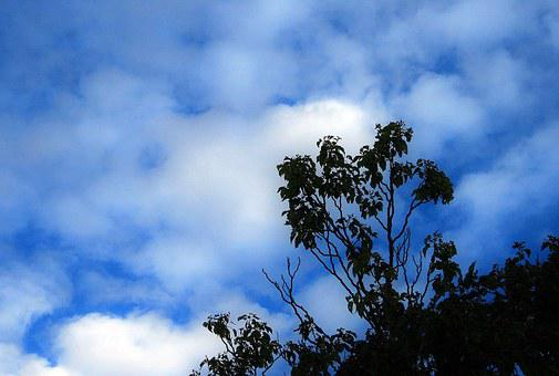 Tree, Sky, Blue, Clouds, White, Scattered