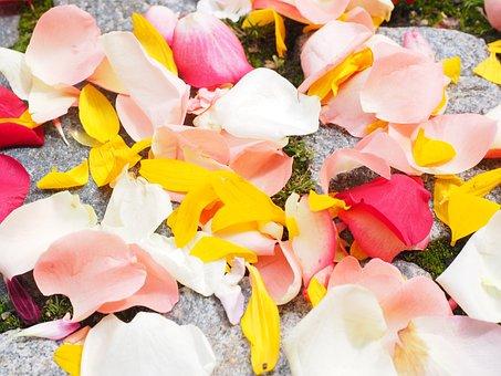 Rose Petals, Petals, Wedding, Red, Pink, Yellow, White