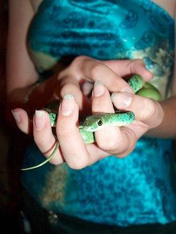 Snake, Hands, Girl, Wildlife, Wild, Poison, Dangerous