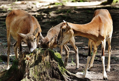 Deer, Young Animal, Wild, Wildlife Park, Forest, Eat