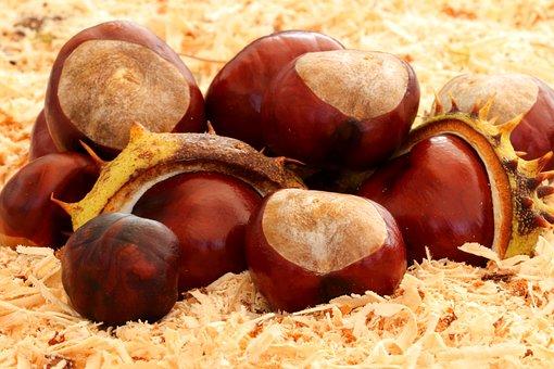 Chestnut, Autumn, Prickly, Spur, Chestnut Tree, Maroni