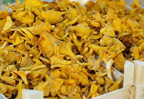 Mushrooms, Chanterelle Mushrooms, Fall, Market