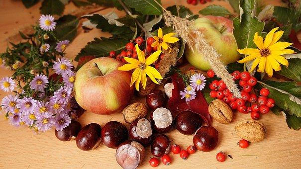 Nature, Plants, Composition, Fruit, Autumn, Flowers