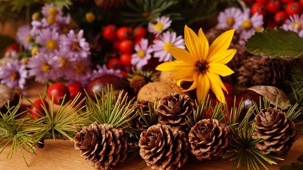Composition, Plants, Flowers, Fruit, Rowan