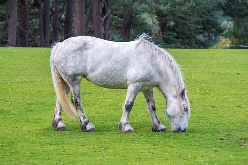White Horse, Horse, Grass, Green, Background, Beauty