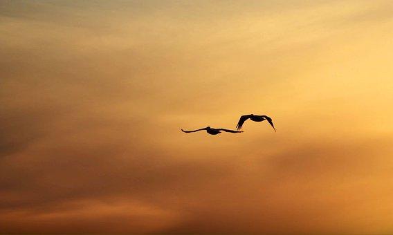 Dusk, Kenora, Ontario, Birds, In, Flight, Nature, Lake