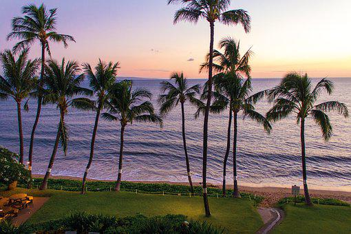 Sunset, Palms, Beach, Grass, Purple, Sea, Hawaii, Maui