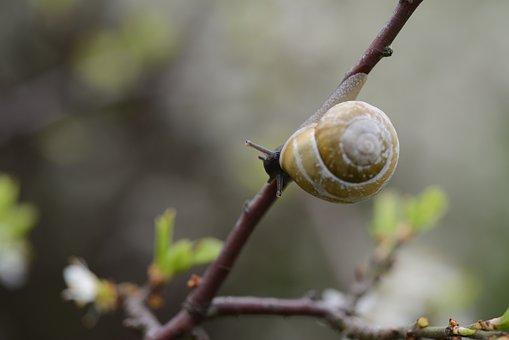 Snail, Branch, Shell, Mollusk, Nature, Animal, Plant