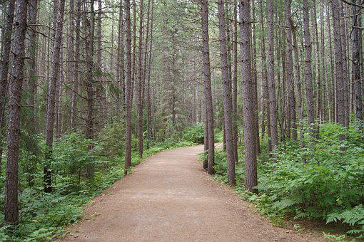 Trail, Algonquin Park, Ontario, Provincial, Path