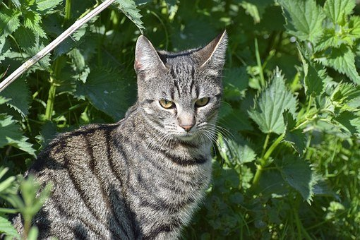 Cat, Domestic Cat, Sweet, Pet, Cat's Eyes, Dear
