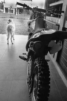 Yamaha Ttr 125, Dog, Waiting