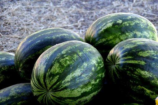 Watermelon, Fruit, Green, Melacias