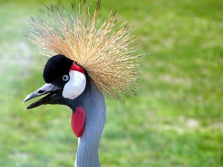 Bird, Hair, Weird, Spiky, Crane, Zoo