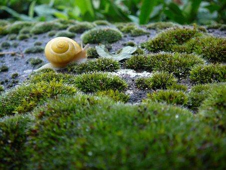 Snail, Shell, Animal, Wet, Rain, Snail Shells, Plant