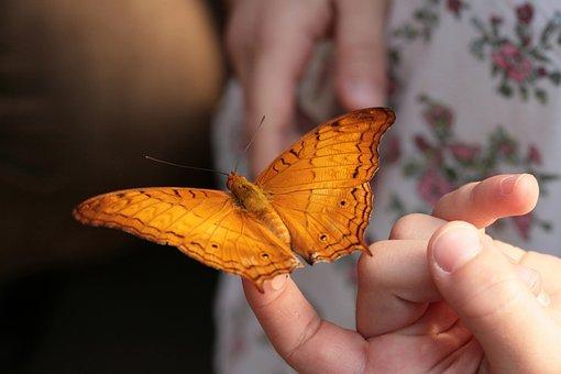Butterfly, Tropics Butterfly, Handzahm, Edelfalter