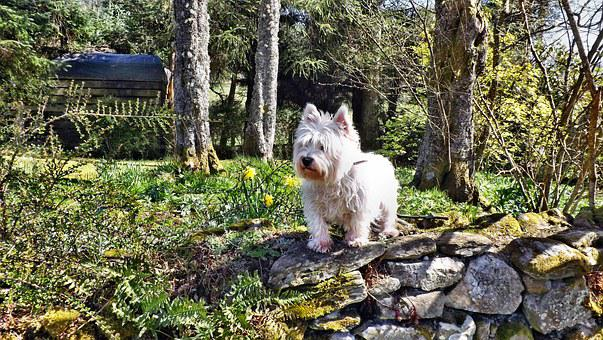 Dog, Pet, Cute, Animal, Posing, Garden