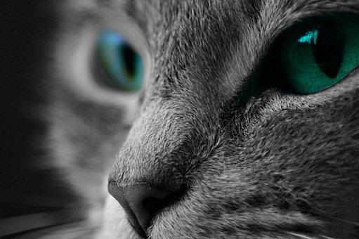 Cat, Macro, Macro Photography, Kitten, Animal, Domestic