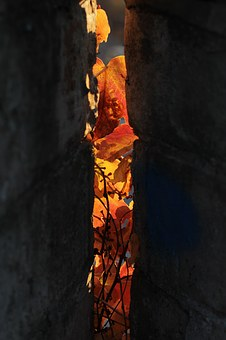 Fall Color, Leaves, Brown, Shadows, Lights
