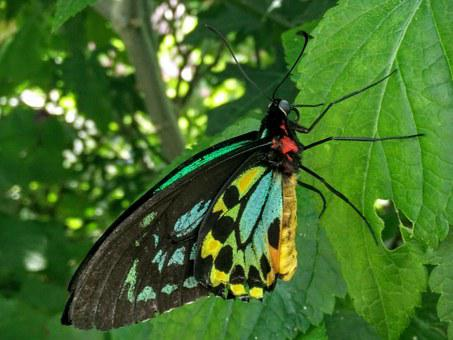 Butterfly, Green, Blue, Yellow, Nature, Insect, Summer