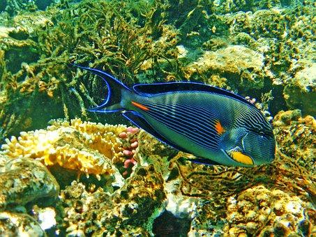 Fish, Cay, The Red Sea, Egypt, Hurgada, Summer