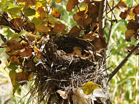 Nest, Abandonment, Absence, Autumn, Colors, Leaves