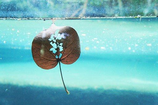 Leaf, Nature, Wet, Natural, Under Water