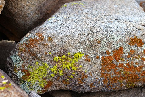 Lichen, Rock, Joshua Tree National Park, Decay, Old
