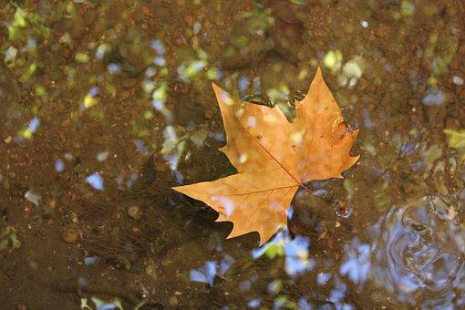 Leaf, Water, Sheet In Water, Autumn, Ocher