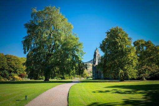 Edinburgh, Holyrood Palace, Garden, Gardens, Tree