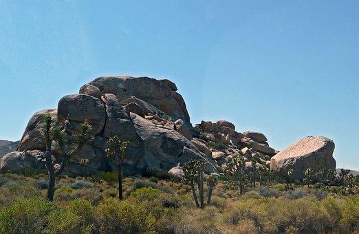 Joshua, Tree, Joshua Tree National Park, California
