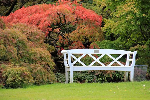 Bank, Autumn, Park, Leaves, Trees, Tree, Meadow, Rush