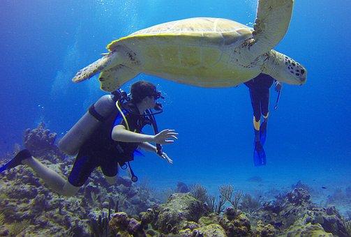 Diver, Turtle, Mexico, Scuba Diving, Sea, Bottles, Blue