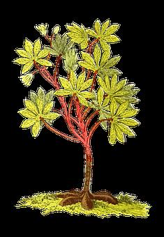 America, Cassava, Edible, Food, Manioc, Plant, Root