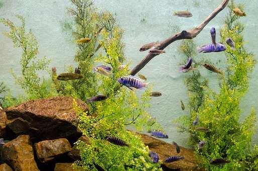 Algae, Aquarium, Biology, Ecosystem, Fins, Fish, Gills