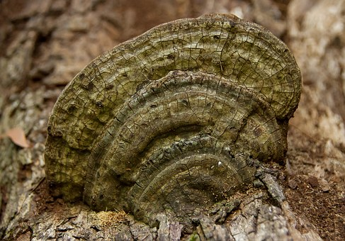 Fungus, Brown, Green, Bracket, Wood, Forest, Queensland