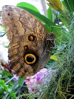 Butterfly, Insect, Close, Wing, Public Record, Animal