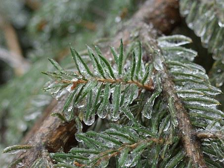 Ice, Obledinenie, Element, Plants, Cold, Coldly, Spruce