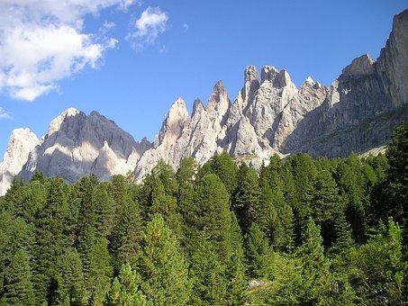 Geisler Range, Dolomites, South Tyrol, Forest