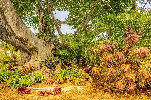 Banyan Tree, South Florida, Shangri-la, Tree, Nature